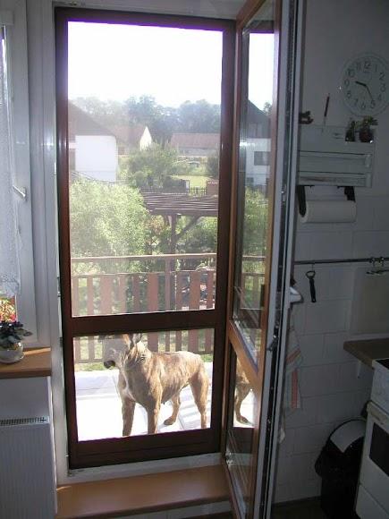 Sítě proti hmyzu udrží na balkoně i středního psa